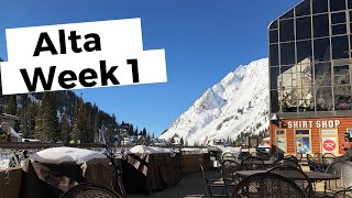 Avalanche in LCC - Alta 19/20 Week 1
