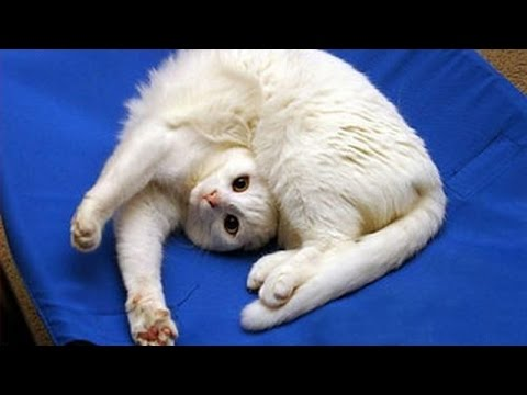 Thumbnail: Funny CATS will always make you laugh - Funny cat compilation