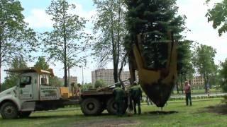 видео Посадка деревьев. Посадка кустарников. Посадка других растений
