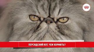Рационы для котов породы ПЕРСИДСКАЯ