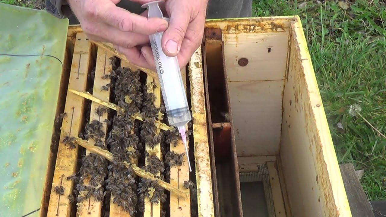 tratamentul albinelor videoclipuri varicose)