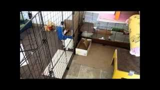 Rabbit/bunny Indoor Cage Setup - Daisy & Jasper's Winter Cage Tour!