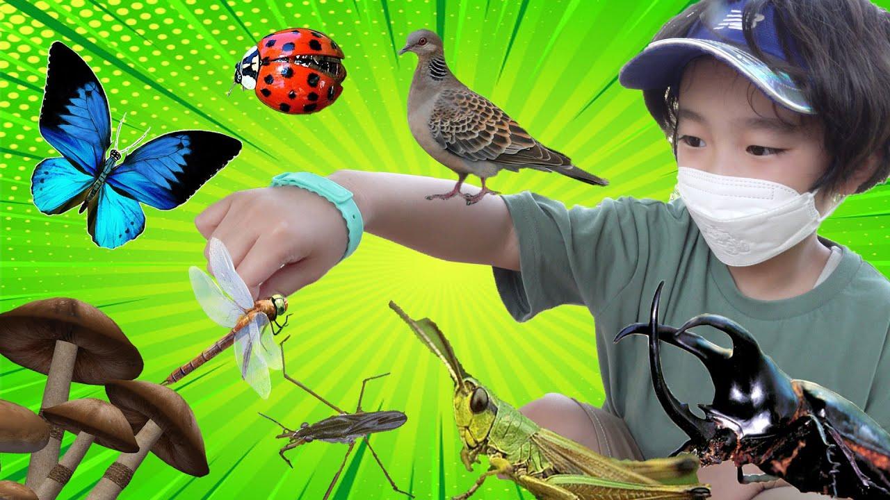 잠자리 메뚜기 소금쟁이 실잠자리 채집해 관찰해봐요 Find an Insect in Park. Catch Bugs Hide and seek with insect   지호랑놀자
