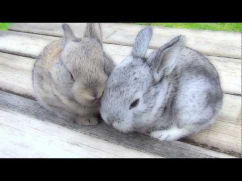 Very Cutest Baby Bunnies, Funny Pets Sitting on the Bench Outside