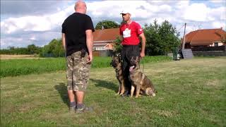 Personal protection dogs couple Monty and Chana