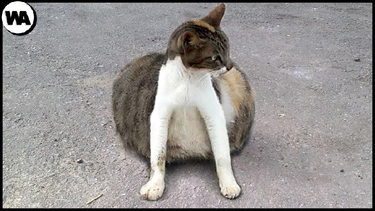 Если Вы Увидите Такую Кошку Уберите Свою От Неё Немедленно