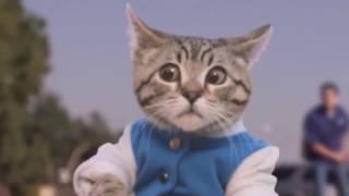 Смешные моменты с котами)))