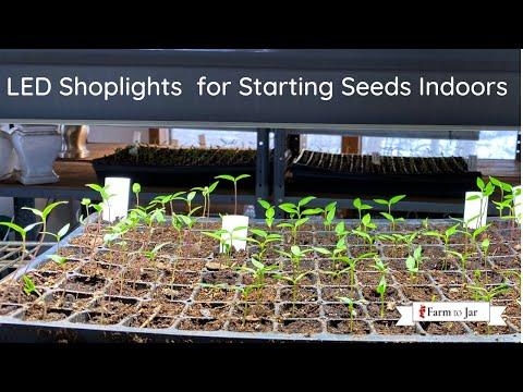 Using shop lights for indoor seed starting; LED vs fluorescent