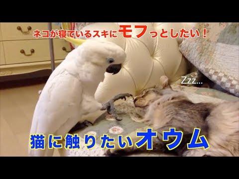 Corey Klug - That's Not How We Pet Kitties, Polly
