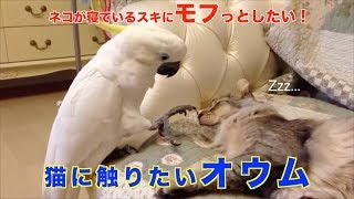 寝ている美人猫を見つめるオウム。そーっと顔を近づけた結果…!