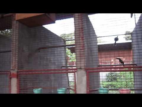 رحلتي لمزرعة الببغاوات في الفلبين parrot farm in manila