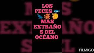 LOS PECES 🐟 🐜 🐙 🐌 MAS EXTRAÑOS DEL OCÉANO..