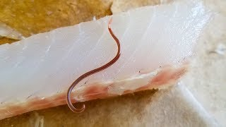Parasite Worm in Fish Meat