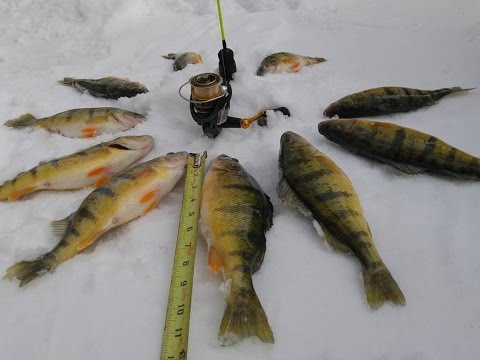ice fishing for perch on Lake Couchiching 2017