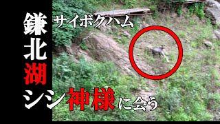 【SEROW】サイボクハムでお買い物ツーリング 鎌北湖にシシ神様が!