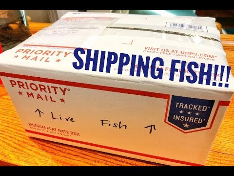 How To Ship Live Fish
