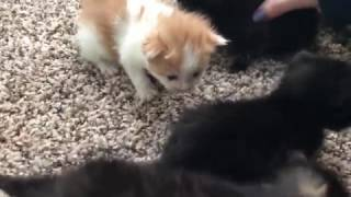 kitten meets cats
