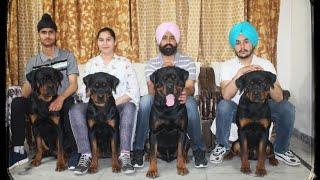 AmanRott | Professional Rottweiler Dog Kennel | Rottweiler Dog Breed,Rottweiler Dog Kennel,Scoobers