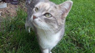 Кошка ест котовник ,узнай в чем его польза.Мои кошки.