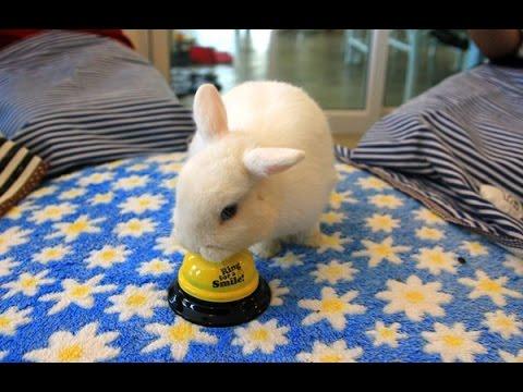 ฮือฮา! ร้านกาแฟเชียงใหม่โชว์กระต่ายแสนรู้ทำได้สารพัด