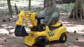 Have fun with monkey - My intelligent monkeys driving RC truck