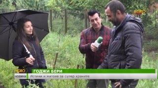Истини и митове за супер храните(Семейството на Марин Петров от луковитското село Торос отглежда годжи бери., 2016-05-17T12:12:21.000Z)