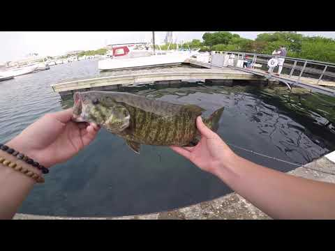 GIANT SPAWNING SMALLIES (CHICAGO)