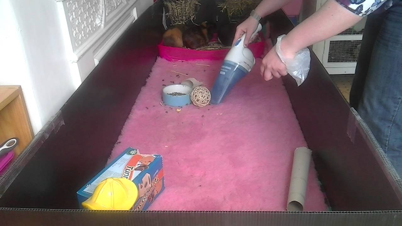 Daily Cleaning Routine For A C C Guinea Pig Cage Using Vet Bed Or Fleece