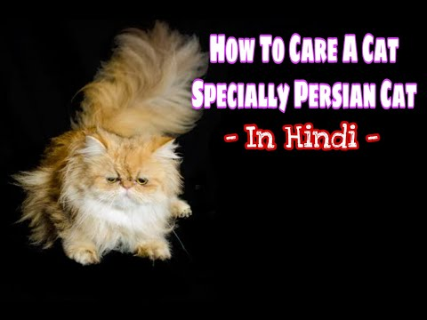 How To Care A Newly Cat in Hindi