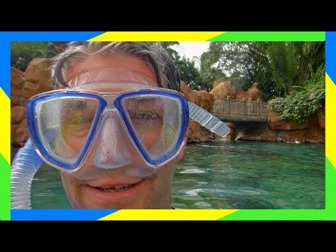 Swimming with Sharks at Discovery Cove! SeaWorld Orlando