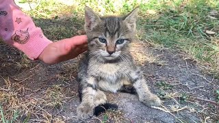Cute kitten with blue eyes needs love and a home