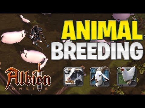 Albion Online | Animal Breeding Guide (2019)