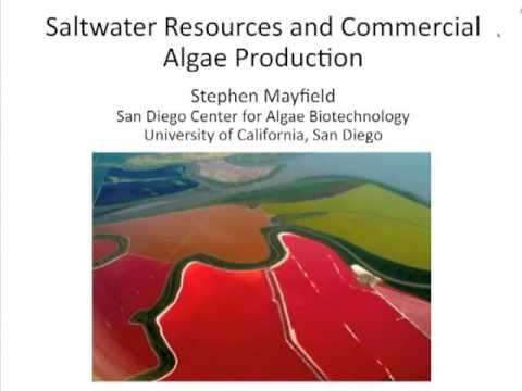 Saltwater Resources and Commercial Algae Production