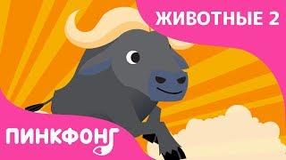 Буйвол — Будь со мною, с Буйволом! | Песни про Животных | Пинкфонг Песни для Детей