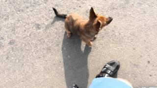 Нашел щенка на дороге(, 2014-09-16T17:51:17.000Z)