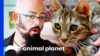 Jackson Is Shocked By Cat's Night Terrors | My Cat From Hell