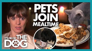 Victoria STUNNED as both Cats and Dogs are Welcomed at Mealtime!  | It's Me or The Dog