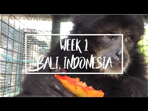 WEEK 1 // Wildlife rescue centre, waterfalls & beaches in Bali