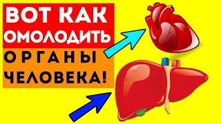 ВОТ КАК ПРОЖИТЬ НА МНОГО ДОЛЬШЕ Обновление печени сердца почек головного мозга и даже