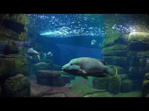 Zoo Aquarium Berlin 4K