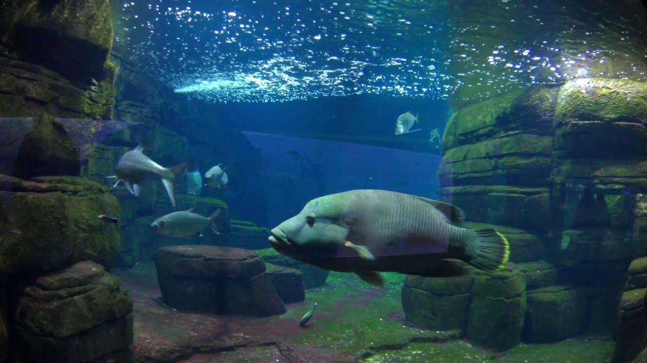 zoo aquarium berlin 4k youtube. Black Bedroom Furniture Sets. Home Design Ideas