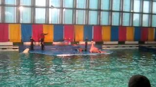 Дельфинарий,Санкт-Петербург(Санкт-Петербург, Дельфинарий., 2011-10-25T05:47:58.000Z)