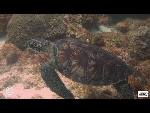 Diving Fairy land (Part 2) - St Lucia