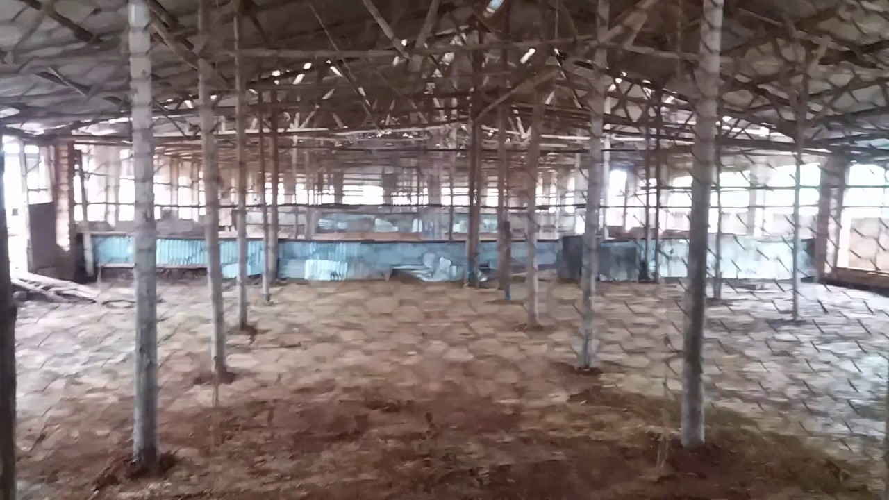 Commercial Chicken House commercial poultry farming in uganda laying a good and strong