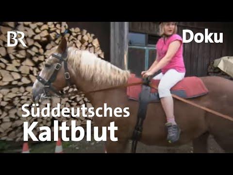 Ruhe und Besonnenheit: Süddeutsche Kaltblüter | Zwischen Spessart und Karwendel | BR
