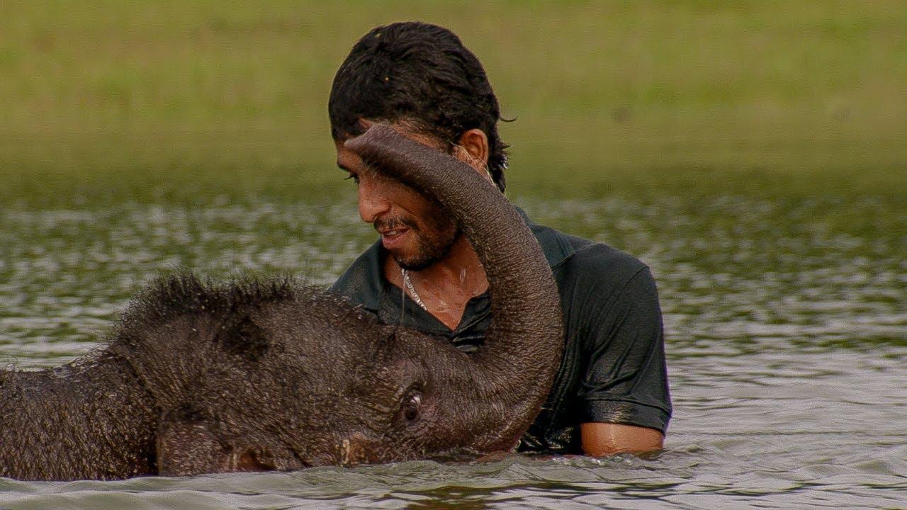 Three Legged Orphan Elephant Bathes with his Human Friend | BBC Earth