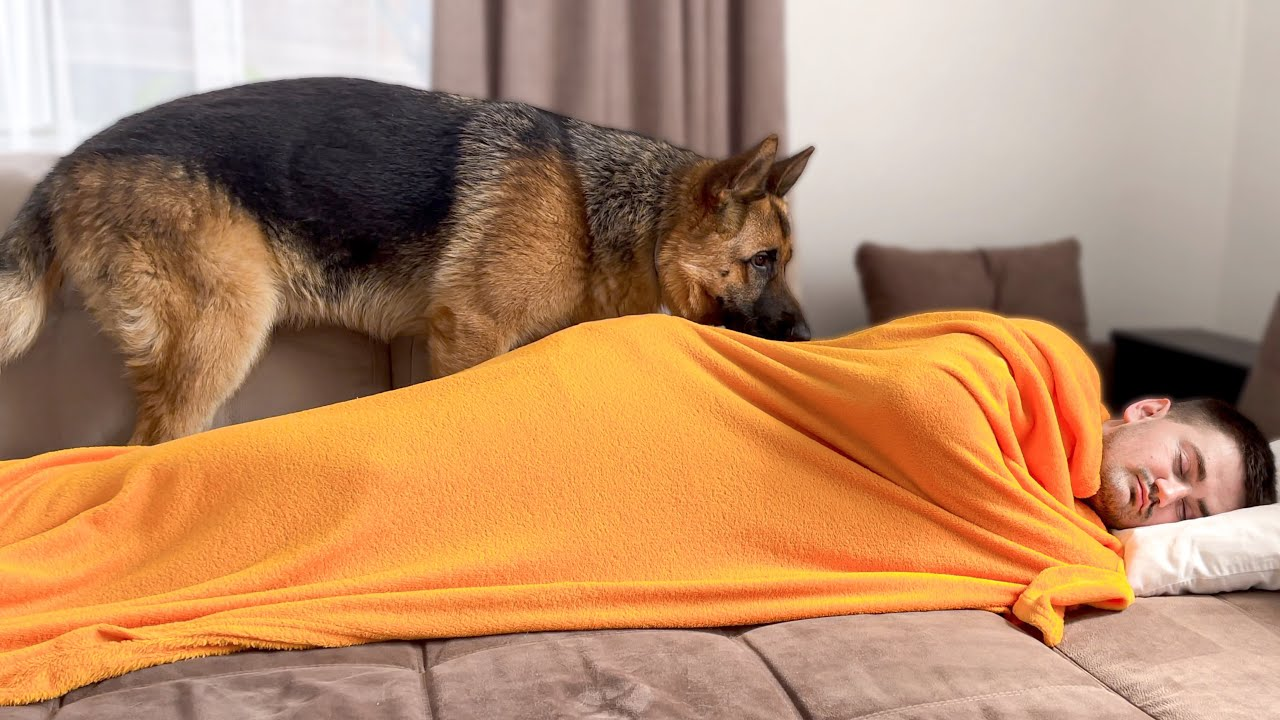 What does a German Shepherd do when He sees Me Sleeping