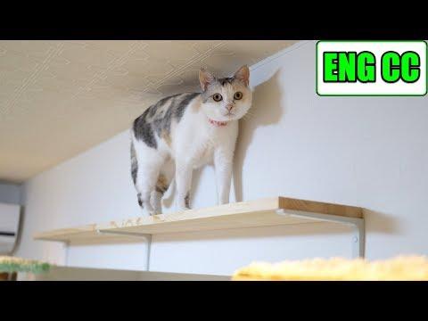 DIYで猫部屋の壁に手作りキャットウォーク part1 壁裏の下地探し【Eng CC】