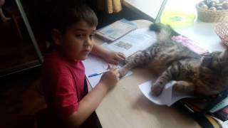 Мейн кун Баффи (5 месяцев) помогает делать уроки