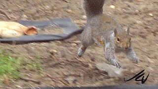 We Need A Break - For Me That Means Nature in Our Backyard - Rocky the Squirrel Past and Present
